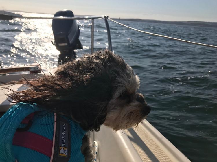 Mr. Scruff on boat